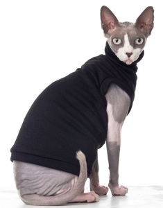 Sphynx_cat_wearing_clothes