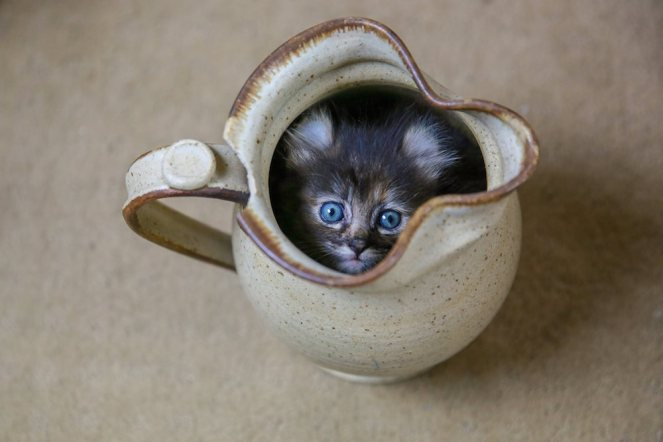 adorable-kitten-in-a-cup1