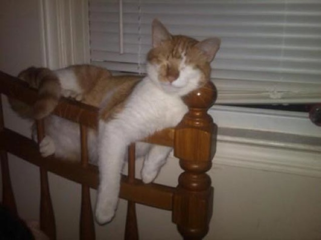 cats-sleeping-funny-positions-15